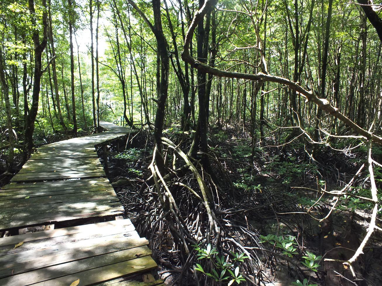Cagar  Alam  Hutan Bakau Pantai Timur Wonderful Jambi